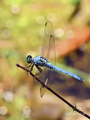 Photograph - Dragonfly Magic by Kerri Farley