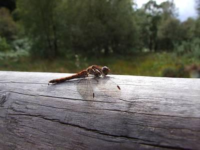 Photograph - Dragonfly by Mariusz Loszakiewicz
