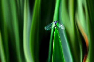 Digital Art - Dragonfly Meditation by Lisa Redfern