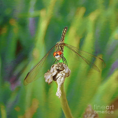Photograph - Dragonfly Nbr 4 by Scott Cameron