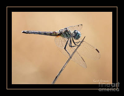 Dragonfly Macro Photograph - Dragonfly Needlepoint With Border by Carol Groenen