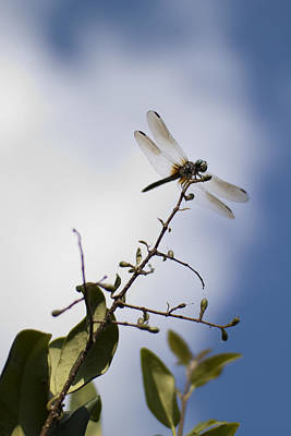Dragon Photograph - Dragonfly On A Limb by Dustin K Ryan