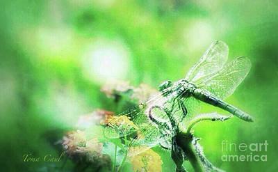 Photograph - Dragonfly On Lantana-green by Toma Caul