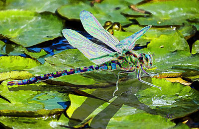 Mixed Media - Dragonfly On Lilypad by Michele Avanti