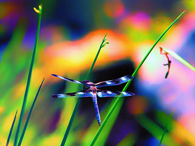 Dragonfly On Pastels Art Print by Bill Tiepelman