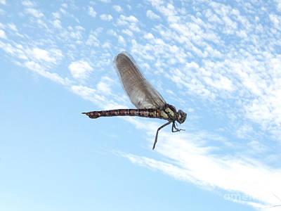 Metal Dragonfly Photograph - Dragonfly On Sky by Miroslav Nemecek