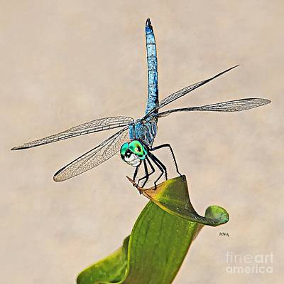 Photograph - Dragonfly by Patrick Witz