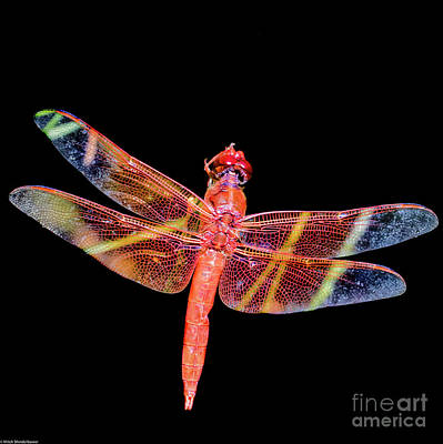 Photograph - Dragonfly Project by Mitch Shindelbower