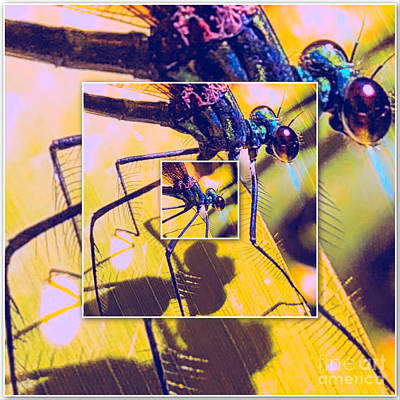 Photograph - Dragonfly Mirage  by Justin Moore