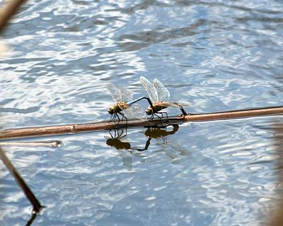 Photograph - Dragonfly Reflections 2 by George Jones