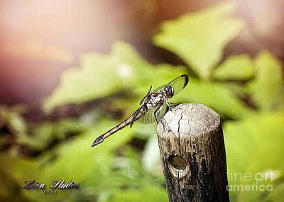 Photograph - Dragonfly Resting by Melissa Messick