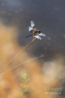 Photograph - Dragonfly by Rima Biswas