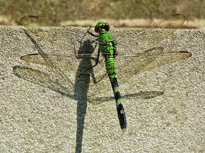 Photograph - Dragonfly Shadow by Cynthia Guinn