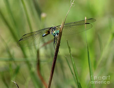 Photograph - Dragonfly Smile by Liz Masoner