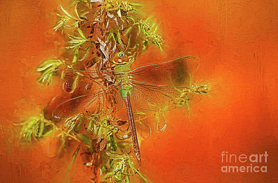 Dragonfly Art Print by Suzanne Handel