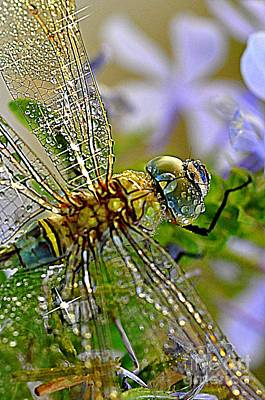 Photograph - Dragonfly by Sylvie Leandre