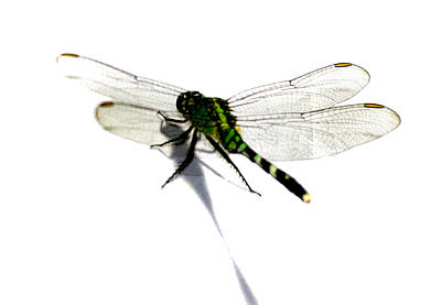 Dragonfly Art Print by Tbone Oliver