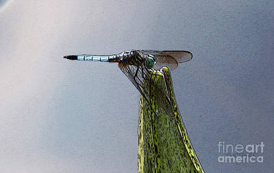 Metal Dragonfly Digital Art - Dragonfly - The Embrace by Yvonne Wright