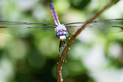 Photograph - Dragonfly Watching by Newman Artography
