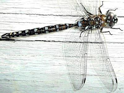 Photograph - Dragonfly by Will Borden
