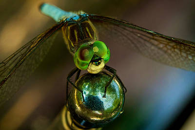 Alien Eyes Photograph - Dragonfly by William Jobes