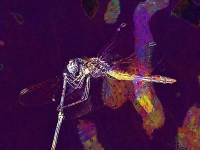 Digital Art - Dragonfly Wings Beauty Insect  by PixBreak Art