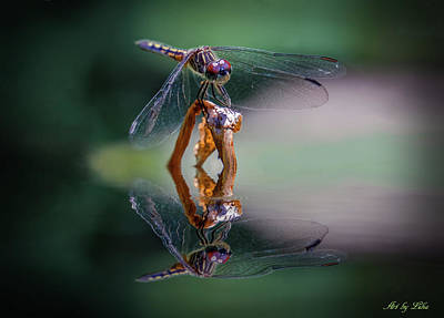 Photograph - Dragonfly With Reflection by Lilia D