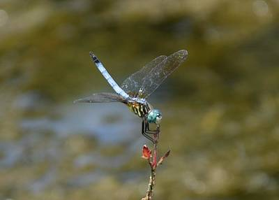 Dragonfly3 Art Print by Bruce Miller