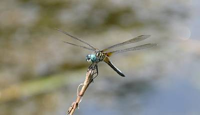 Dragonfly4 Art Print by Bruce Miller