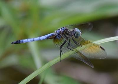 Dragonfly5 Art Print by Bruce Miller