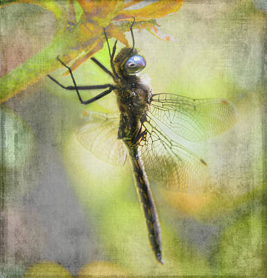 Photograph - Dragonfly Resting - Textured by Marilyn Wilson
