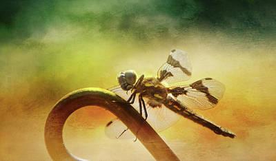 Photograph - Dragonflyz by Marilyn Wilson