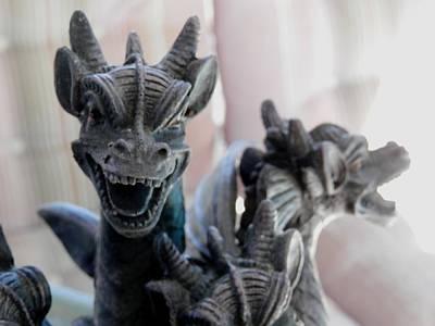 Photograph - Dragons In Florida by Belinda Lee