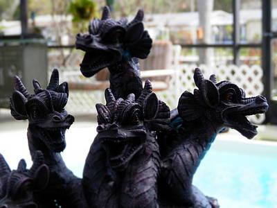 Photograph - Dragons Pooolside by Belinda Lee