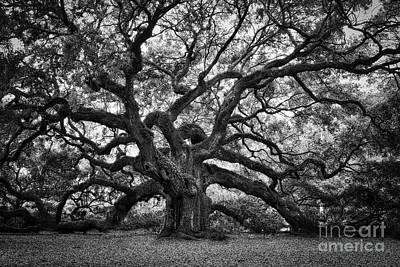 Dramatic Angel Oak In Black And White Art Print