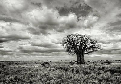 Baobab Photograph - Dramatic Baobab by Vicki Jauron