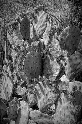Photograph - Dramatic Black And White Orange Blossom Cactus by Aimee L Maher Photography and Art Visit ALMGallerydotcom