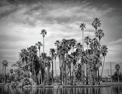 Photograph - Dramatic Black And White Palm Trees At Encanto Park by Aimee L Maher Photography and Art Visit ALMGallerydotcom