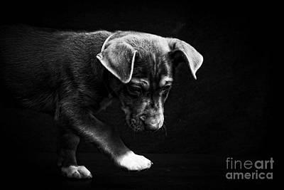 Dramatic Black And White Puppy Dog Art Print