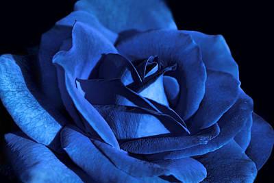 Rose Portrait Photograph - Dramatic Blue Velvet Rose Flower by Jennie Marie Schell