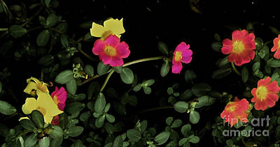 Photograph - Dramatic Colorful Flowers by James Fannin