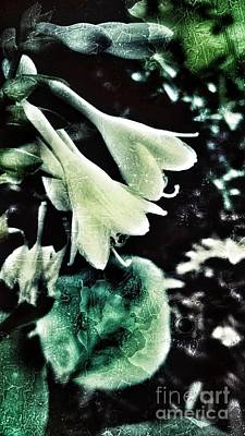 Photograph - Dramatic Hosta by Rachel Hannah