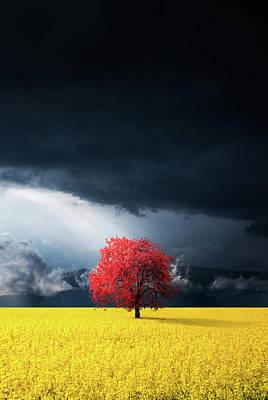 Photograph - Dramatic Landscape by Bess Hamiti