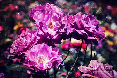 Dramatic Mauve Roses Art Print
