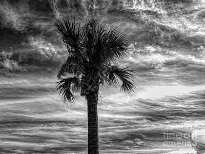 Photograph - Dramatic Palm Tree In Black And White by Luther Fine Art