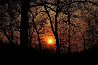 Photograph - Dramatic Sunset Through Trees by Matt Harang