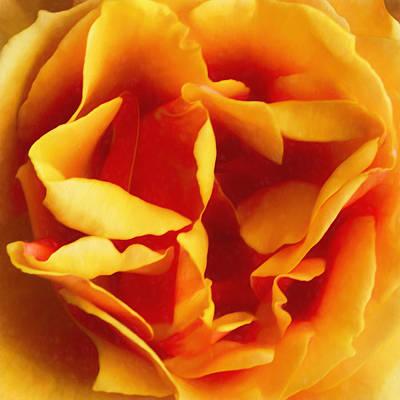 Photograph - Dramatic Yellow Rose by Bonnie Follett