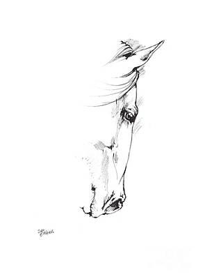 Andalusian Horse Drawing - Drawing Of A Horse 2017 02 05 by Angel Tarantella