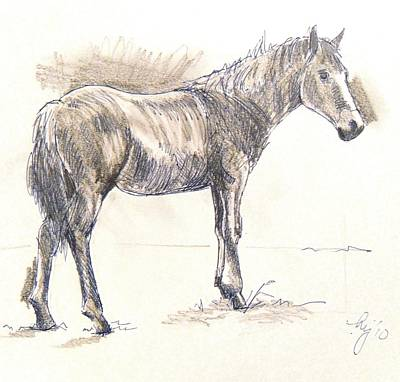 Drawing - Drawing Of A Horse by Mike Jory