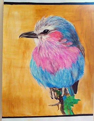 Drawing Of A Lilac Breasted Roller Bird Original